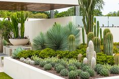 View our gallery full of our recent work for a little bit of inspiration on your next project! Small Tropical Gardens, Small Courtyard Gardens, Outdoor Gardens, Landscape Design, Garden Design, Hillside Landscaping, Xeriscaping, Dry Garden, Agaves