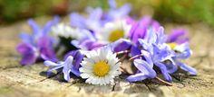 #spring #flowers / seguici su www.cocoontravel.uk