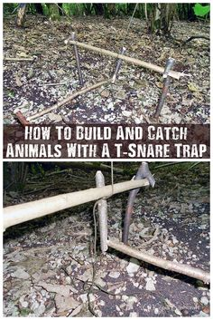 """How To Build And Catch Animals With A T-Snare Trap - The T-snare trap is one of the easy traps to build and is very effective at catching small to medium and in some cases large animals. Having the skills and know how to build any trap is an advantage in any situation so having at least this in the """"skill bank"""" may just help you out if you are bugging out or find yourself lost and in a survival situation."""