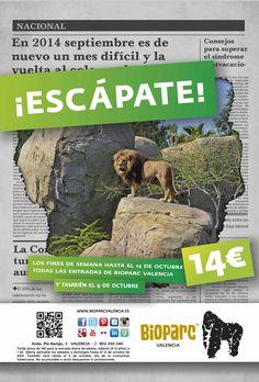 Los fines de semana de septiembre ¡Escápate! a Bioparc Valencia por sólo 14€. www.bioparcvalencia.es