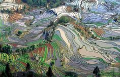 agricultural terraces in yunnan