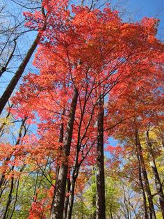 Fall foliage in Elkmont - Great Smoky Mountains National Park