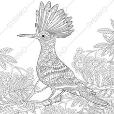 Hoopoe Bird on Rowan Tree Adult Coloring by ColoringPageExpress