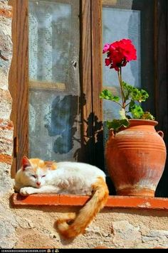 Window cat.