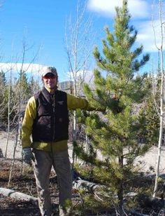 Today @ Colorado State University - Local charity to cut, deliver 300 Christmas trees that were harvested from Warner College's Pingree Park Mountain Campus!