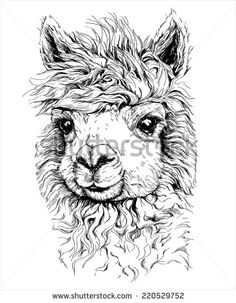 realistic sketch of LAMA Alpaca, black and white drawing, isolated on white. vector illustration. - stock vector