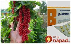 B-komplex - jednička proti mšicím a také proti komárům a klíšťatům. Fruit, Plants, Gardening, Garten, Lawn And Garden, Planters, Plant, Square Foot Gardening