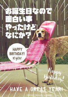 Birthday Messages, Birthday Cards, Happy Birthday Animals, Birthday Photos, Cute Animals, Life, Bday Cards, Pretty Animals, Anniversary Cards