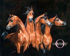 Four Amazing Bay Arabians.
