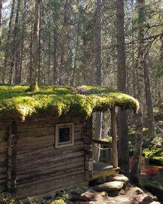 Luonnon lumoa: Keski-Suomen TOP 10+1 Plants, Tops, Planters, Plant, Planting