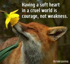 Having a soft heart is a cruel world
