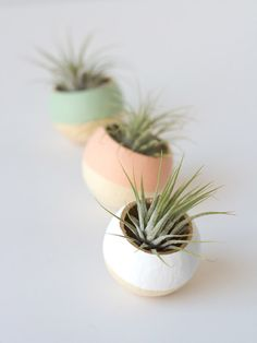 gold-rimmed air plant cups