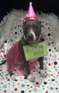 This is the only kind of Pittie party I want to attend.  Thankfully, Violet already has a tutu!