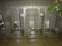 Just liking the inside of this kennel