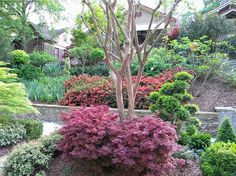 Ways to Landscape With Shrubs - This dwarf red Shaina Maple shrub standout from the rest of the plants in this landscape. It gives a lovely foliage throughout the growing season. Landscaping Shrubs, Garden Shrubs, Outdoor Landscaping, Front Yard Landscaping, Landscaping Ideas, Arizona Landscaping, Inexpensive Landscaping, Farmhouse Landscaping, Chelsea Flower Show