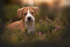 cuteness overload by Hannah Meinhardt on 500px
