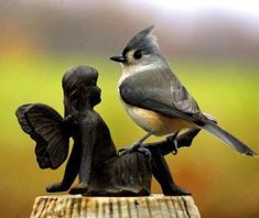 Tufted Titmouse making a new friend.