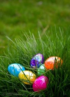 easter eggs in grass - Google Search