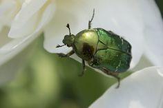 Buggy Bug by ioanaartlover.deviantart.com on @deviantART