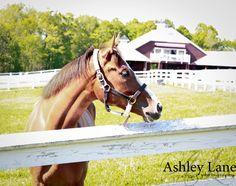The friendliest horse I've ever seen!
