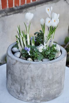 Types of Houseplant Bugs and Methods to Check Their Infestation Pretty Spring Planter. Garden Bulbs, Garden Planters, Love Garden, Dream Garden, Container Plants, Container Gardening, Concrete Candle Holders, Bulb Flowers, Plantation