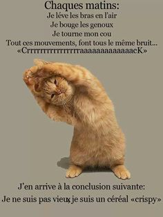 From Self Hate - to Self Love - With Bikram Yoga I Love Cats, Cute Cats, Funny Cats, Animals And Pets, Funny Animals, Cute Animals, Pintura Yoga, Yoga Gato, Bikram Yoga Benefits