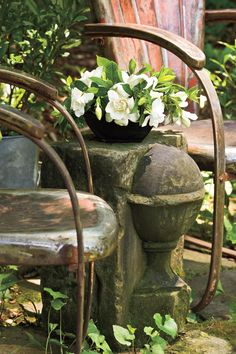 Many of our best-loved plants first entered the South through Charleston. Here's the fascinating story of how they came through the region's garden gateway to your backyard. Herb Garden, Garden Plants, Home And Garden, Classifying Plants, Camellia Plant, Charleston Gardens, South Carolina Vacation, Lagerstroemia, China Rose