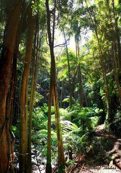 Mt Tamborine - Queensland, Australia