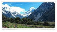 New Zealand Tour package From India