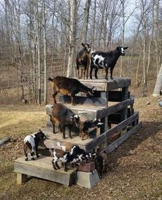 DIY Toys For Your Goats - your goats will love these... #goats