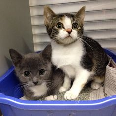 These little kittens are just some of animals that are going to be at the Pennsylvania SPCA Tour for Life event today from 12-4 #tourforlife2015 #pspca #purina #kittenlove #nofilter #northshoreanimalleague #betterwithpets #route4 #karlaandkiki