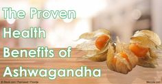 """Ashwagandha has demonstrated numerous healing properties for many diseases. It also helps your body to better handle stress and relieves depression and anxiety. <a href="""""""" rel=""""nofollow"""" target=""""_blank"""">articles.mercola....</a> http://articles.mercola.com/sites/articles/archive/2016/06/13/ashwagandha-medicinal-uses.as…"""