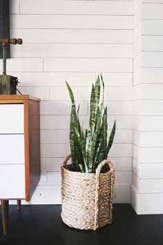 Five EASY To Care For Houseplants snake plant … - House Plants