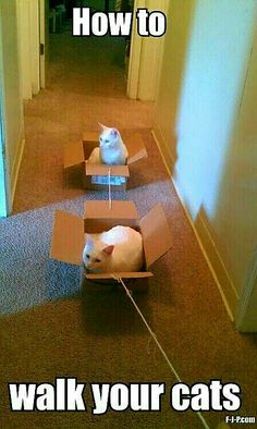 awesome Scientists Have Found A Way To Successfully Walk Cats cute animals cat cats adorable animal kittens pets kitten funny pictures funny animals funny cats Funny Animal Pictures, Funny Animals, Cute Animals, Funniest Pictures, Funniest Animals, Wild Animals, Crazy Cat Lady, Crazy Cats, Silly Cats