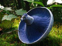 hongos y setas alucinantes29