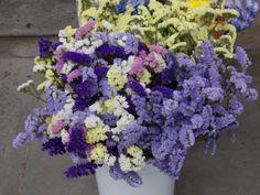 Flores tipicas toscanas