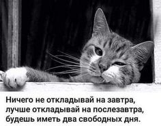 Clever Quotes, Funny Phrases, Creative Posters, Cool Words, Quotations, Psychology, Jokes, Cats, My Love