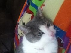 My cute cat that I love dearly