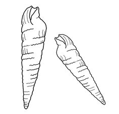 Seashell Coloring Pages Photos