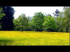 Sorinel Ghita-Spring Time - YouTube