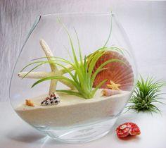 Decorative Vase - Glass Vase w Stricta HardLeaf Air Plant - Starfish - Shells - Home Decor - Gift - Zen Garden - Beach Decor - Housewarming on Etsy, $38.00