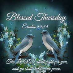 Blessed Thursday thursday thursday quotes thursday quotes and sayings thursday quote images Thursday Pictures, Thursday Quotes, Morning Verses, Good Morning Quotes, My God Shall Supply, Good Thursday, Thursday Morning, Exodus 14 14, Hold Your Peace