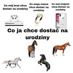 My Passion, Horses, Humor, Wattpad, Twitter, My Crush, Humour, Horse, Jokes