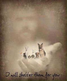 God loves our fur babies! He wouldn't let them just cease to exist; Animals do have a soul, and we'll see them again in heaven. All Dogs, I Love Dogs, Dogs And Puppies, Doggies, Animals And Pets, Cute Animals, Pet Loss Grief, Pet Remembrance, Tier Fotos