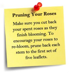 Pruning Your Roses