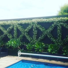 Tips For Making A House Fence With Stunning Vertical Garden Ideasl 56 design sichtschutz 56 Tips for Making a House Fence with Stunning Vertical Garden Ideas