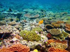 10 sítios que deve visitar antes que desapareçam    Grande Barreira de Coral, Austrália. É a maior do mundo e cobre mais de 244 mil quilómetros quadrados. As cores conferidas pela variedade da vida animal e vegetal nestas águas tem atraído muito turismo. Wikimedia Commons
