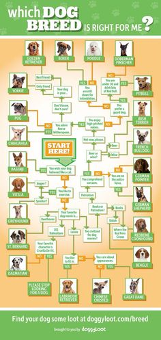 Follow this chart to help decide which breed is BEST for your living situation and lifestyle. Just because you want a big Saint Bernard or Great Dane does not mean that you can afford it or that it would be best for your 2 bedroom apartment or home with small yard. Also try to consider how often you are home. It takes a lot of time raising a puppy and taking care of them. It's important to have enough time to spend with your pet.