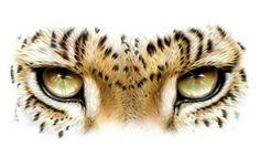 Leopard Eyes by Adam Scott Rote