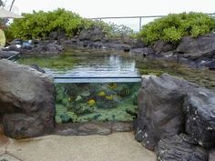 Lago com peixes grande no jardim com estilo de tanque